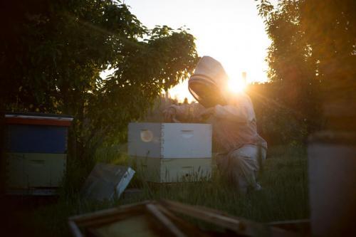 taos-honey-box2-raw-honey