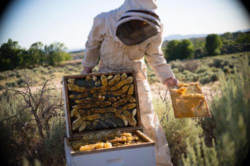 taos-honey-box3-raw-honey
