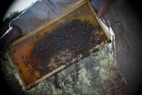 taos-honey-hive-raw-honey