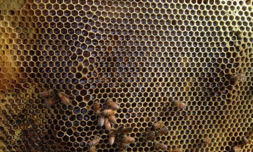 taos-honey-hive-raw